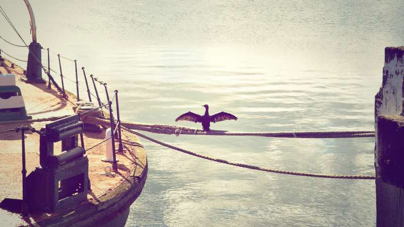 Denizde Halat