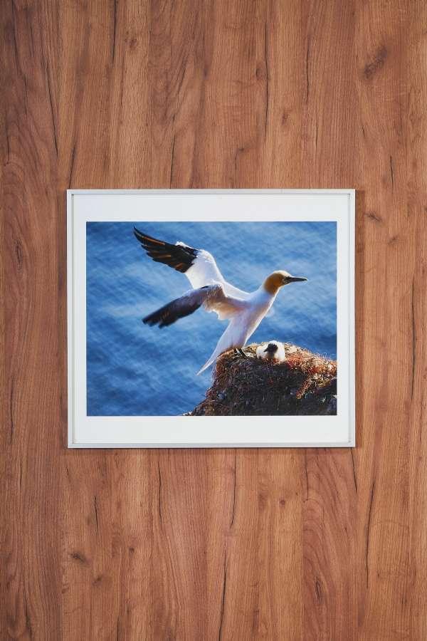 Su Üstünde Kuş Yuvası Orta Boy Tablo